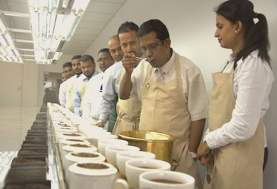 Findout more about training on tea tasting